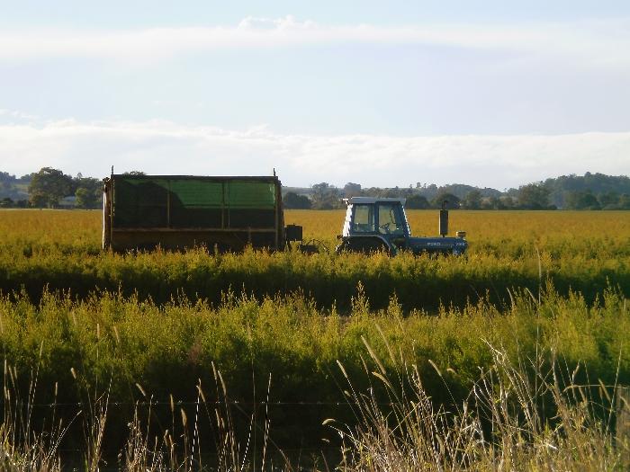 ティートリーの農場