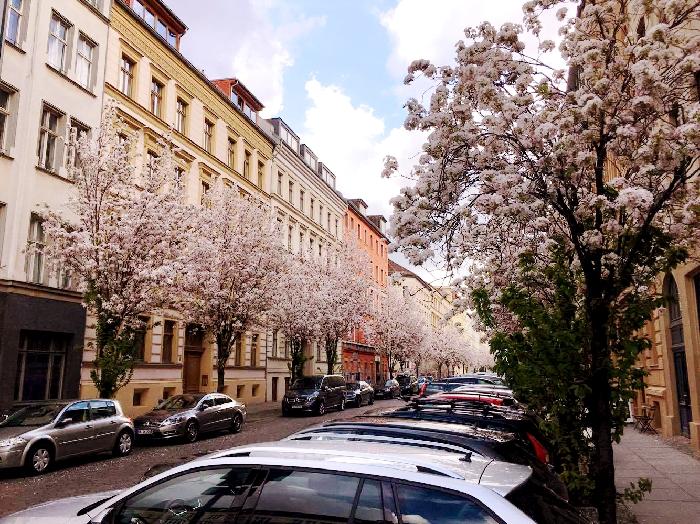 ベルリンにも桜並木