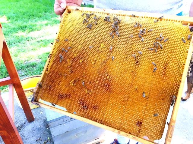 養蜂家の仕事を体験見学
